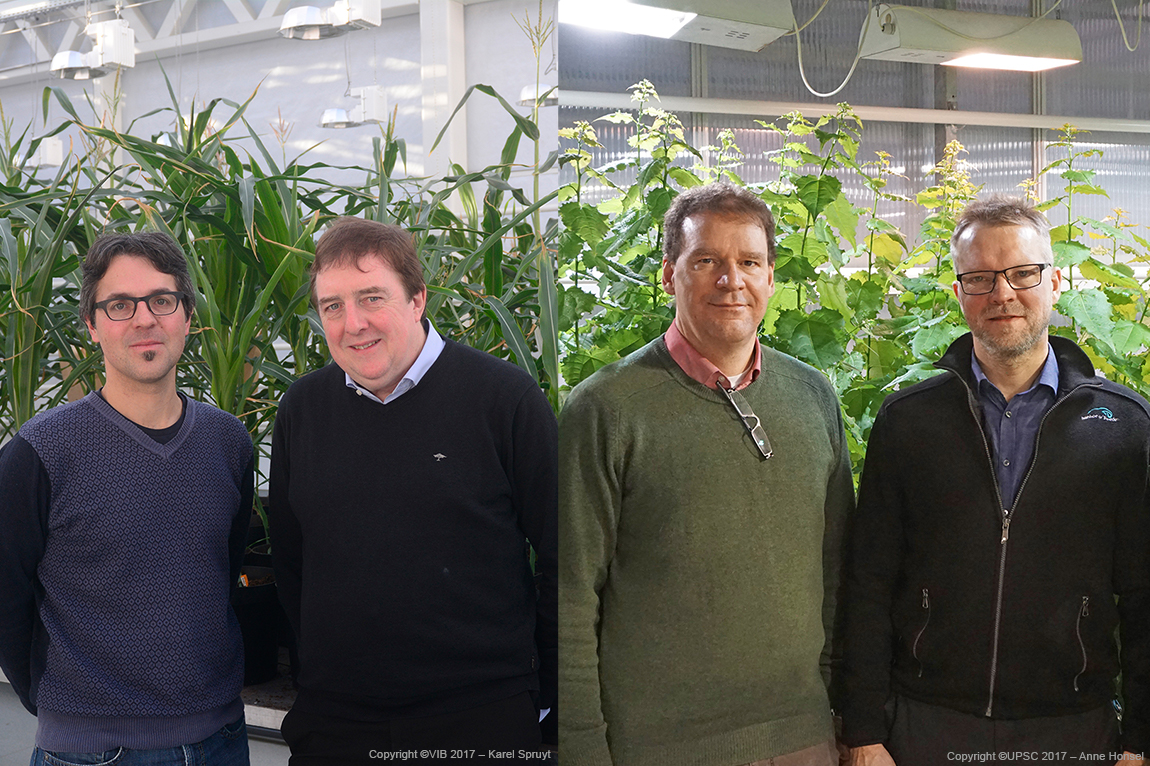 UPSC enters partnership with Swe Tree Technologies and the Belgian VIB Center for Plant Systems Biology to identify genes controlling growth