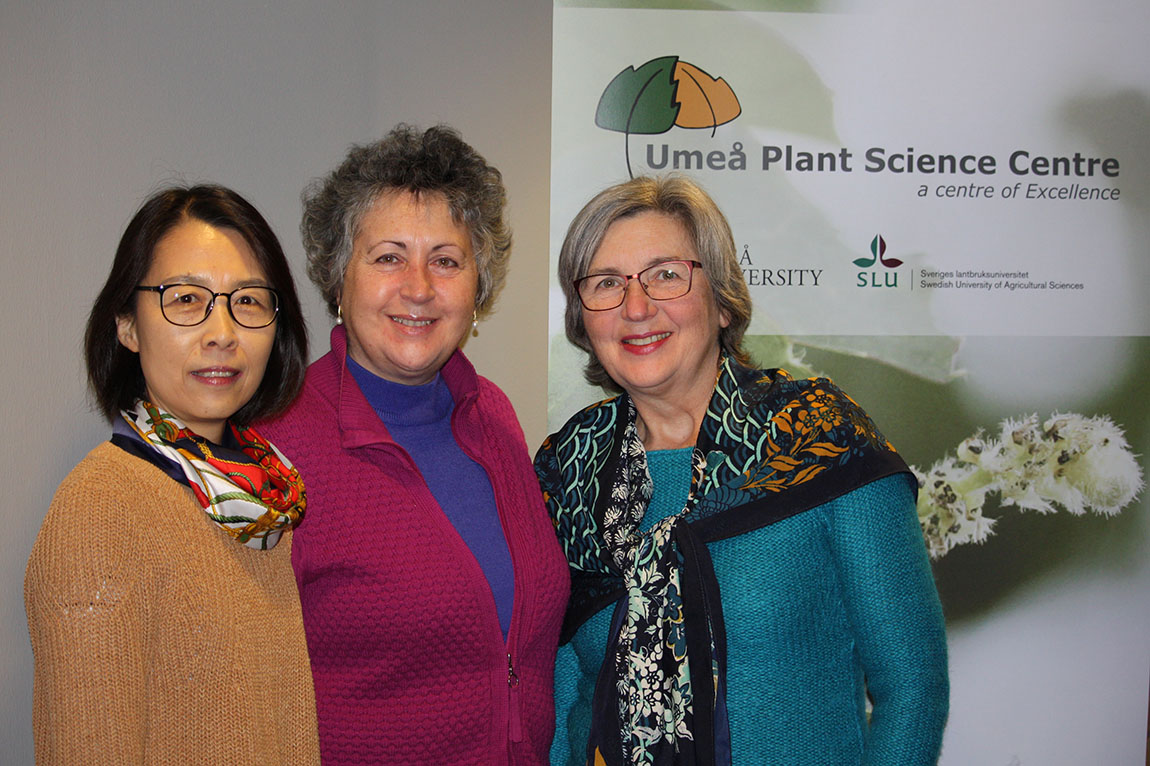 Three projects on plant research get funding from Vetenskapsrådet