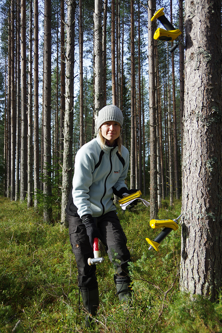 Irena Fundová measuring acoustic velocity on a standing Scots pine tree (photo: xxx)