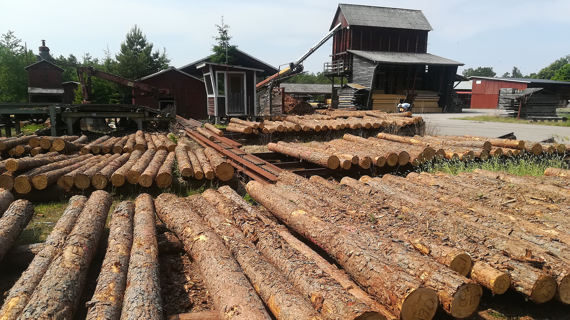Scots pine logs in a sawmill - Irena Fundová used logs as reference to assess wood quality in standing trees (photo: Irena Fundová)