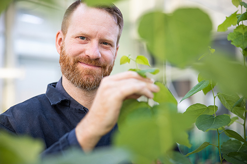 Kindgren, Peter - Coding versus Non-coding Transcription in Plants