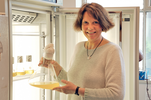Funk, Christiane - Shedding Light on Photosynthetic Antenna Proteins