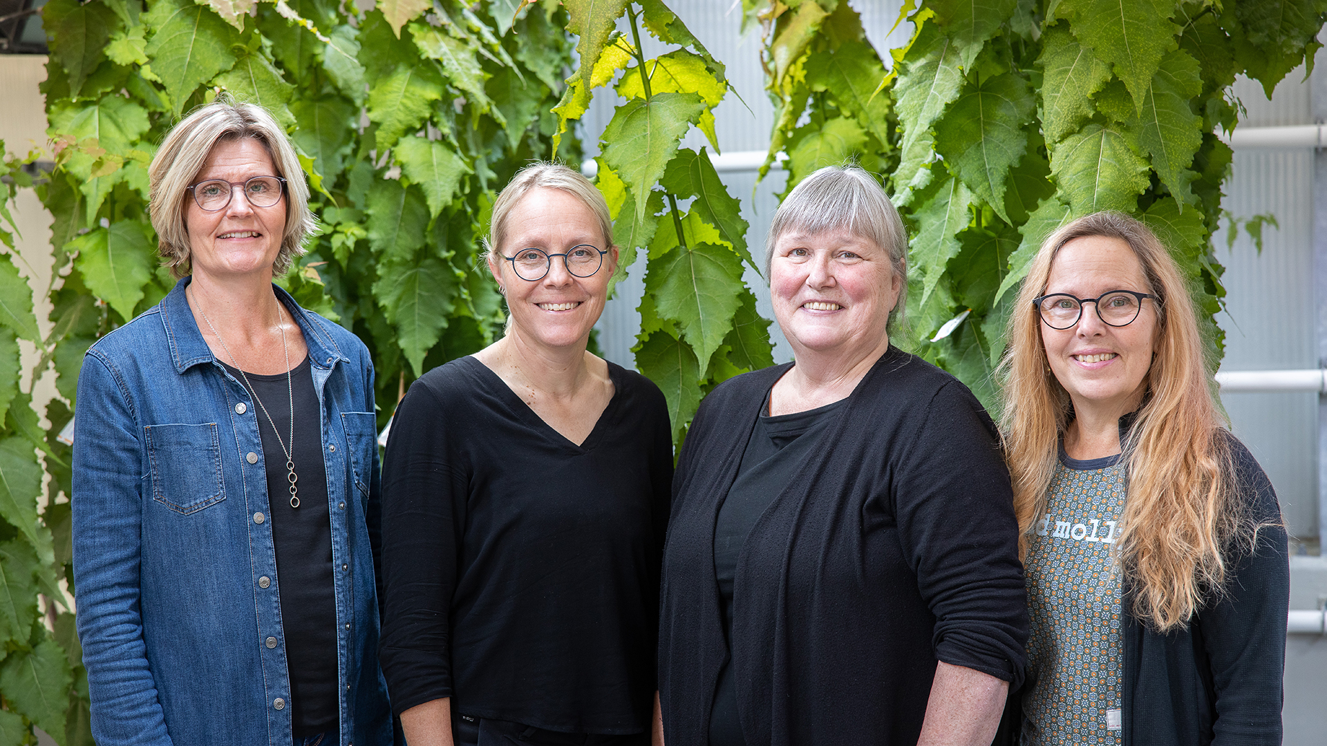 Greenhouse personnel - from left to right: Åsa Gavelin, Anna Brännström, Ann Sehlstedt, Anna Forsgren (photo taken by Fredrik Larsson)